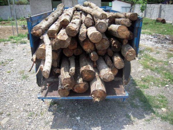 کشف ۱۸ تن چوب قاچاق در کرمان | فردای کرمان